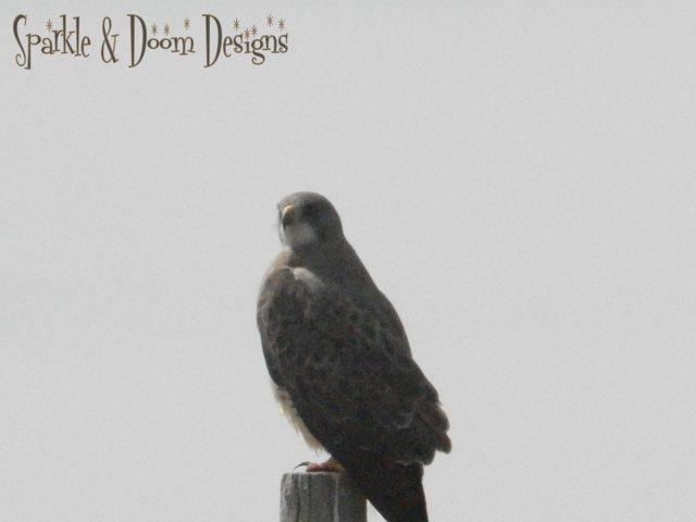 Sparkle&Doom Designs Saskatchewa Hawk