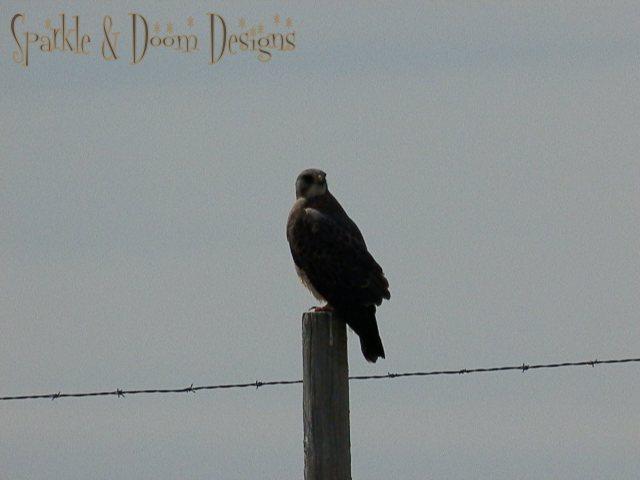Sparkle&Doom Designs Saskatchewan Hawk