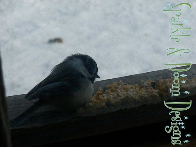 fluffy chickadee on the windowsill
