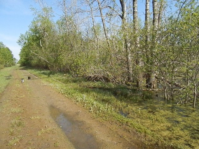 Our water table is quite high, and a lot of our land is turning into swamp.  You can see how it's killed the trees.