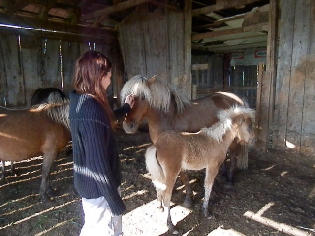Rhiannon and the ponies
