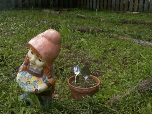 Mrs.Gnome watching over my dill pot and carrot & onions bed.