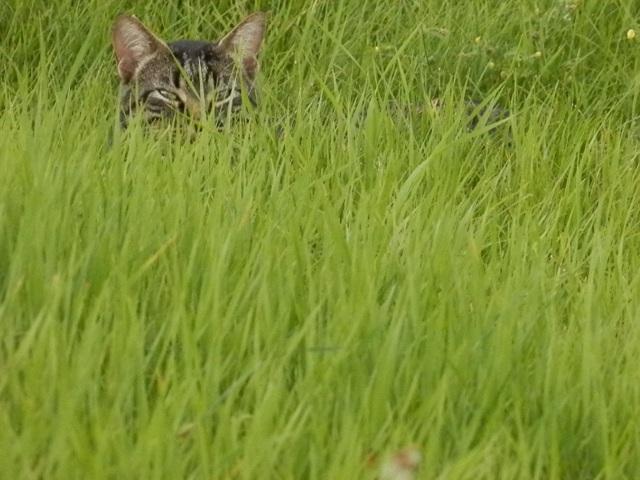 sneaky Walker