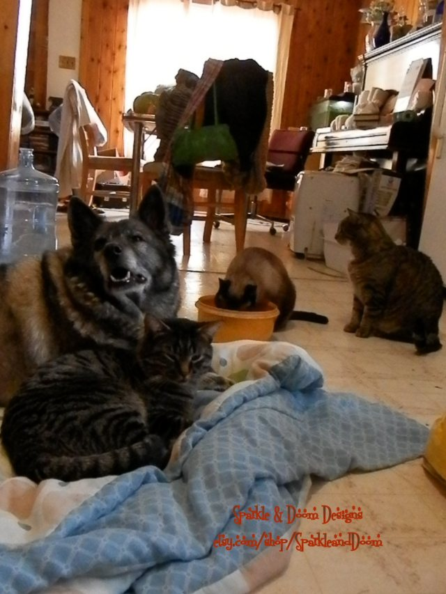 Asha during her last days in the kitchen with her kitty friends