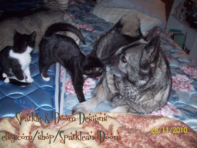 Asha with the cats when they were babies